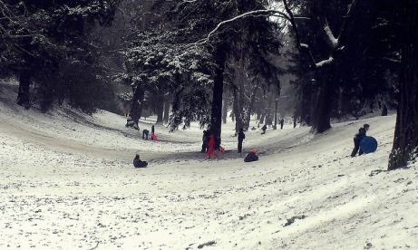 Sledding at Laurelhurst Park.