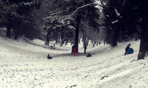 Sledding at Laurelhurst Park.