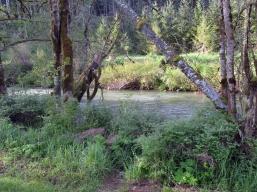 Nehalem River at Anderson Park.
