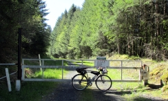 My start of the Columbia Forest Road.