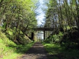 Top of the Nehalem Grade, CZ Trail.