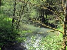 Scappoose Creek.