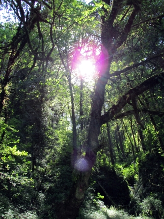Magickal forest.