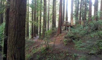 Redwood Grove.