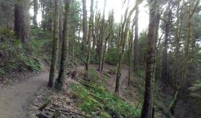 Wildwood Trail.