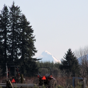 The elusive Mount Jefferson!