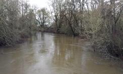 The Tualatin River runs high and fast.
