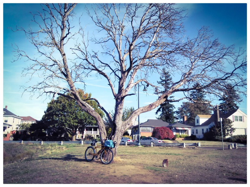 Dead Madrona Tree.
