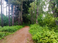 another-forest-another-trail-columbiasloughtrail-columbiaslough_26592892732_o