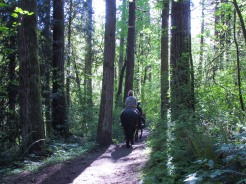 fellow-trail-users_26508541376_o