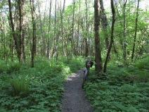 stone-mill-trail_26536786625_o