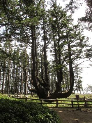 the-octopus-tree_25794704504_o