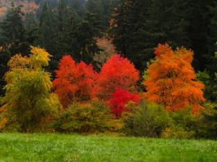 a-riot-of-color-hoytarboretum_29959387914_o