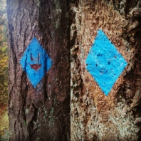 faces-on-the-blue-blazes-wildwoodtrail-wildwoodtrailpdx_29938125864_o