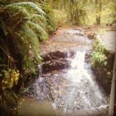 falls-on-balch-creek-forestparkportland-forestparkpdx-balchcreek_29938017974_o