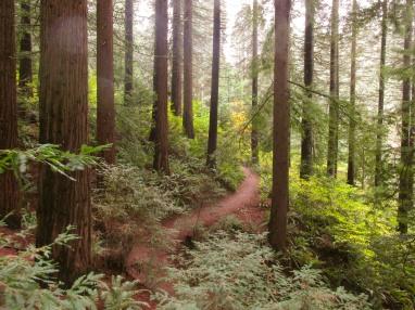 so-peaceful-the-redwood-trail-in-hoyt-arboretum-redwoods-hoytarboretum_29957363763_o