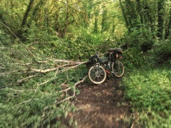 the-crown-zellerbach-trail-was-in-ok-condition-after-a-long-and-wet-winter-it-was-muddy-in-spots-and-there-was-this-one-downed-tree-i-had-to-get-over-crownzellerbachtrail-coastminitourma